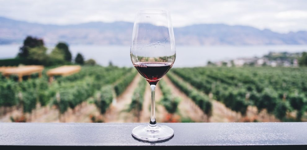 with Swan Valley Wine Tours