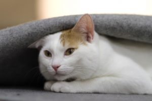 home remedy for cat anxiety