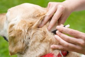 Flea And Ticks Prevention