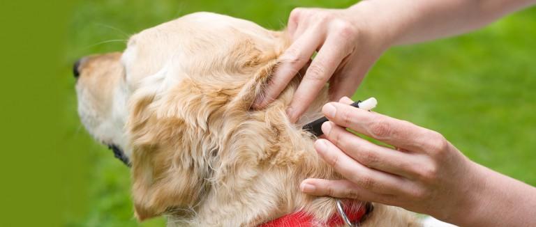 Flea And Ticks Prevention
