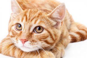 Calm Your Stressed Cat
